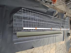 联生供应温氏专用运输塑料鸡笼/养鸡专用