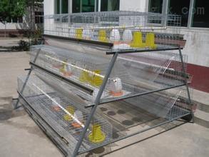 供应塑料鸡笼、成鸡笼、组合式鸡笼周转筐