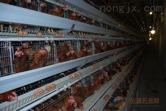【生产厂家】供应加厚型运输鸡笼 塑料笼子