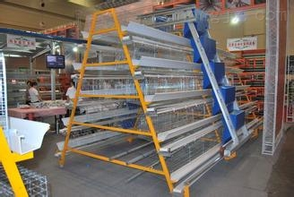 供应 塑料鸡笼 规格700*500*275 大量生产直销