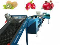 凯祥牌瑞光5号油桃选果机设备,供应瑞光5号油桃自动选果机设备