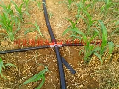 商洛商州玉米膜下滴灌水肥一体化|滴水带价格