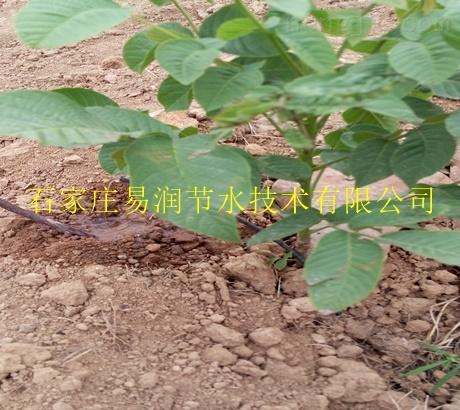 紊流器/小管出流/滴灌毛管供应白银区农田