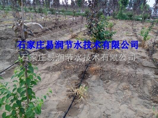 广西百色市果树滴灌施肥罐过滤器设备