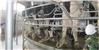 转盘式挤奶设备