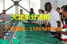 XGJ-SZZ火龙果选果机-火龙果分选的好的选果机器
