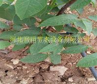 鹿邑县售水肥一体化用滴灌毛管 河南果树小管出流技术推广