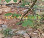 齐全可定制会同县水肥一体化果树滴灌 湖南压力补偿式滴头设备优