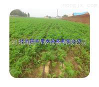 湖南大田滴灌系统布置 溆浦县滴灌带 滴水带便宜