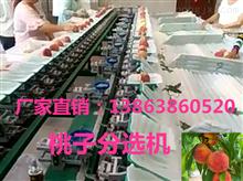 XGJ-T江苏桃子选果机特价出售