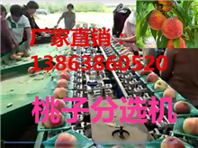 XGJ-T江苏黄桃分果机受到认可