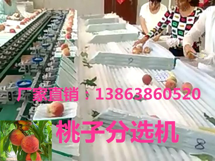凯祥江苏桃子分级机-水果分级机-高品质分选机