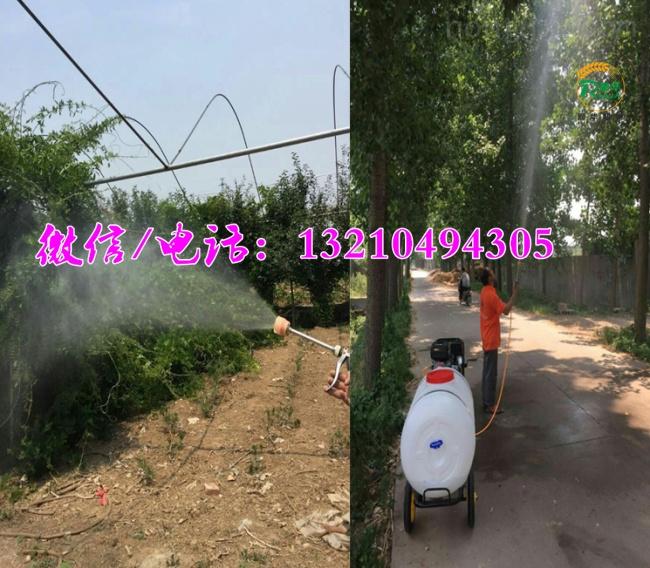 手推式喷药喷雾器 园林植保喷雾器 喷雾器生产