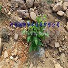 齐全邢台市稳流器厂家专业生产 河北果树滴灌灌溉投资小