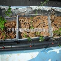 邢臺市滴箭設備不易堵塞 河北滴灌滴箭系統安裝成本低