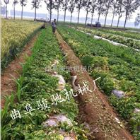 优质手扶杀秧机 小型红薯打秧机 生产厂家