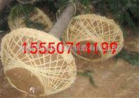精品链条挖树机 园林苗木起球机 便携式树苗移栽机