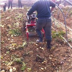SL SHJ河北塘沽农用马铃薯土豆收获机