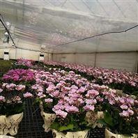 蘭花養殖加濕設備 大棚噴霧加濕系統