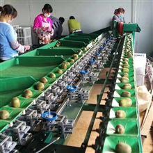 XGJ-MHT江西猕猴桃自动选果机 节省人工的分选机