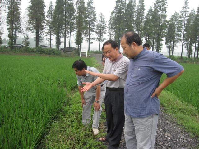 水稻品种优质化 农机农艺更融合