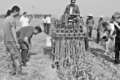 新型大蒜收割机解放蒜农