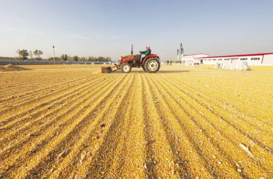 2016年度新玉米收购已圆满结束