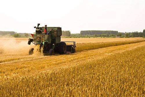 分析:小麦收割机保有量直线上升 农机手跨区作业是否有必要?