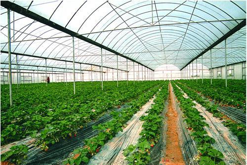 2017中国设施农业产业大会将于郑州举办