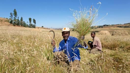 李荣刚:埃塞俄比亚农业引路人