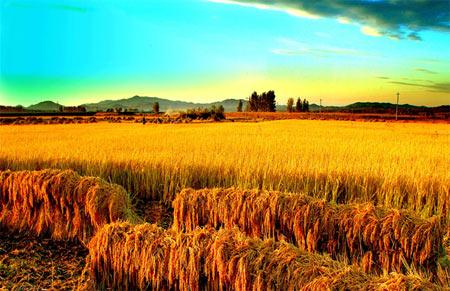 """农业生产托管解决""""谁来种地""""难题"""