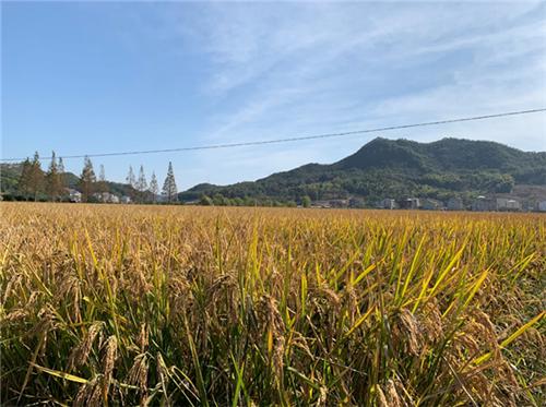 河南省:2020年全省秸稈綜合利用率達到90%