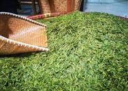 公益直播助力17县市春茶售卖 12小时销售茶叶总额超200万元