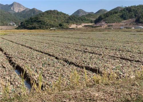 農業農村部召開常務會議研究支持東北地區深化改革創新 推進農業高質量發展等工作