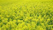 山西省2020年非粮类农机技术推广项目实施方案