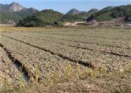 把脈農機化技術短板 助力中藥材產業發展