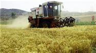 夏天到了,使用小麥收割機該注意什么?