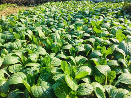 遼寧省今年將新增設施農業10萬畝