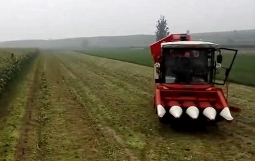 天人农机收获甜玉米