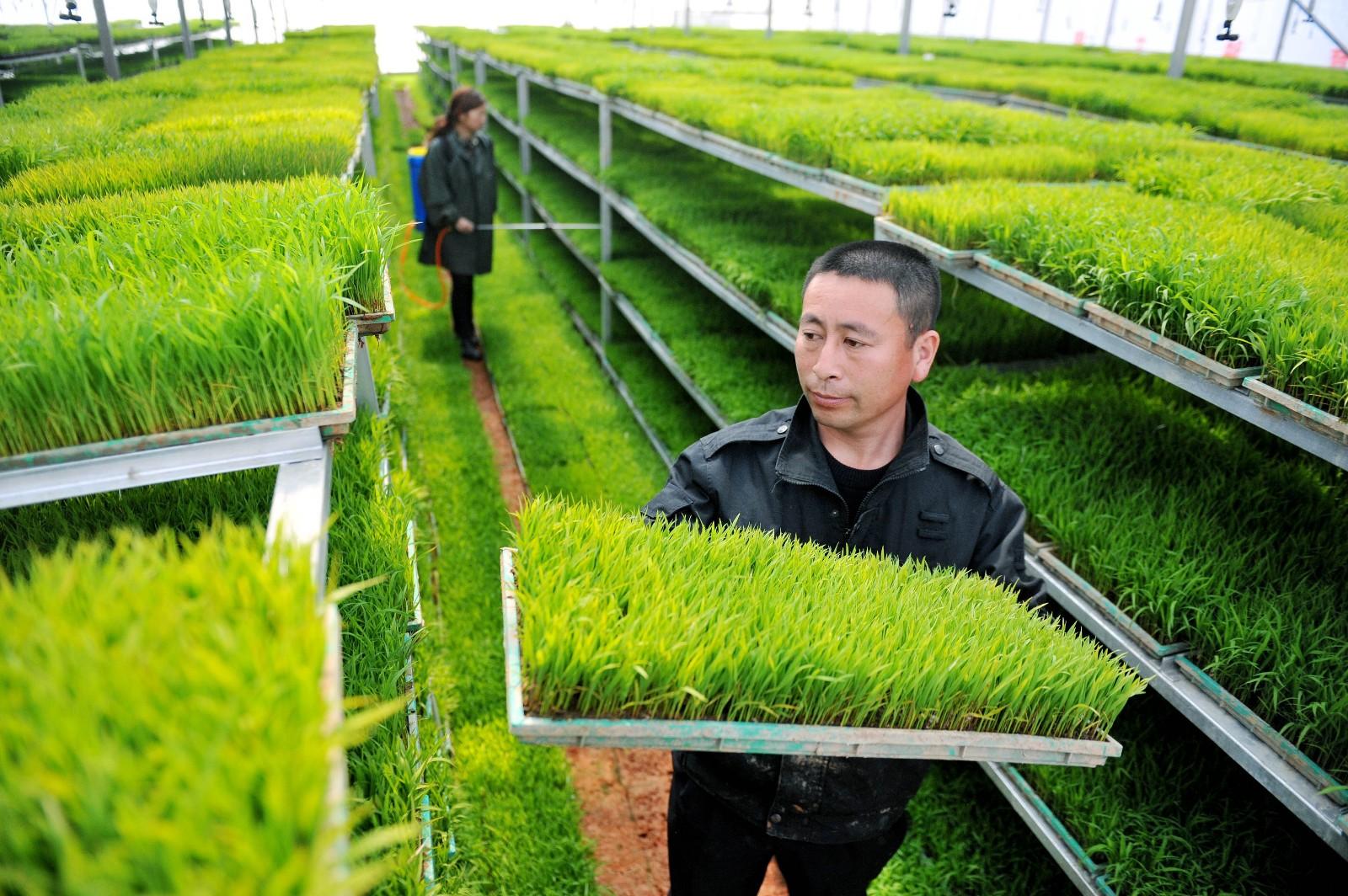 农业生态环境恶化 旧污未去新污又来