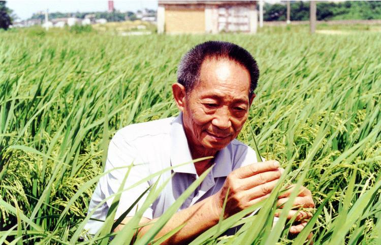 袁隆平的自白 超级稻不是万能 但请别再泼脏水
