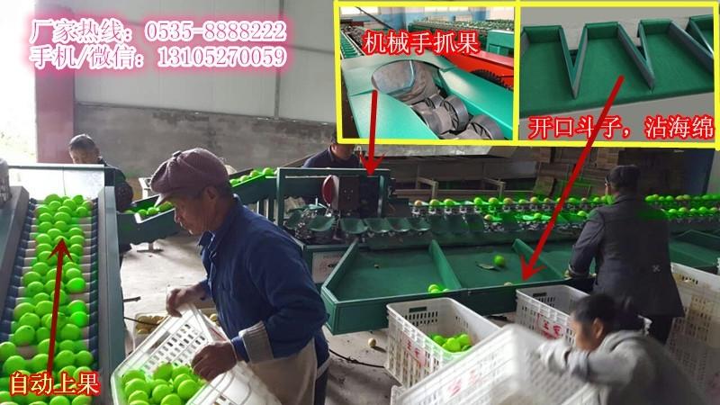 凯祥青枣选果机    选果机厂家直销       选果机售后服务完善
