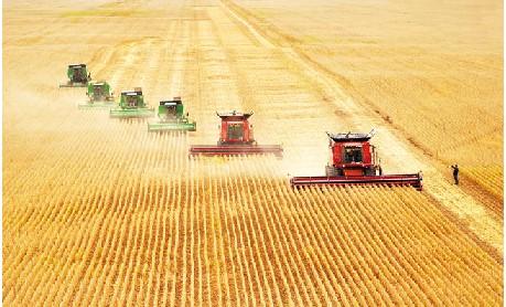 西安长安区:以土地托管推动粮食规模化生产图片