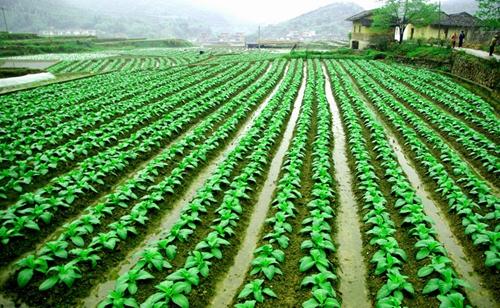 铁力市产业结构调整 大力发展绿色农业