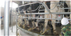 ZP24-80轉盤式擠奶設備
